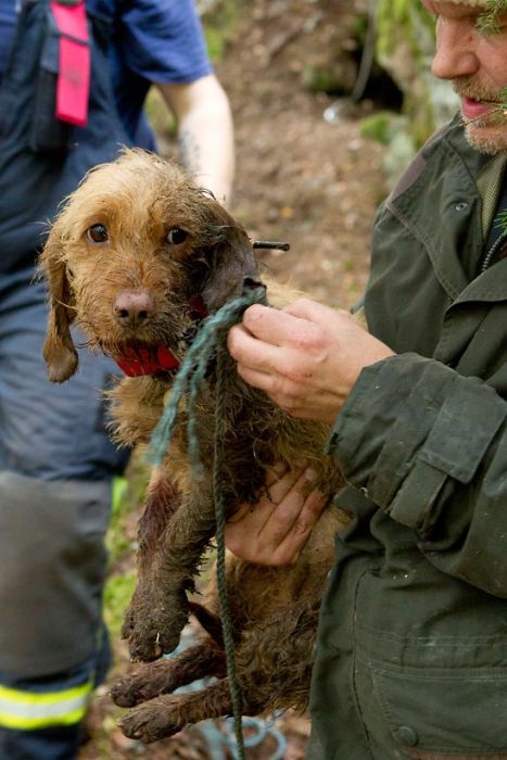 Dogs Rescued After Being Trapped (6 pics)