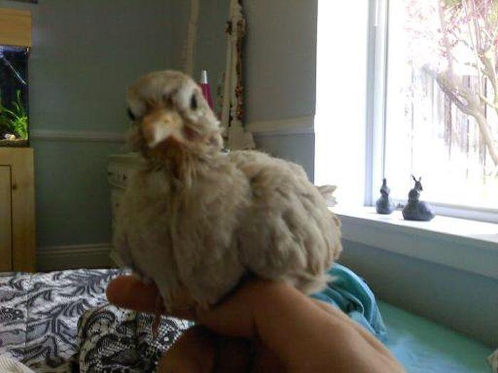 Raising a Bird (31 pics)