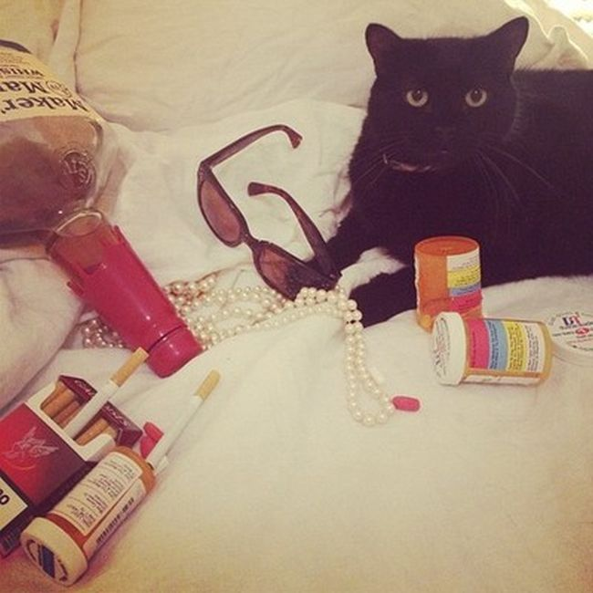 Rich Cats of Instagram (27 pics)