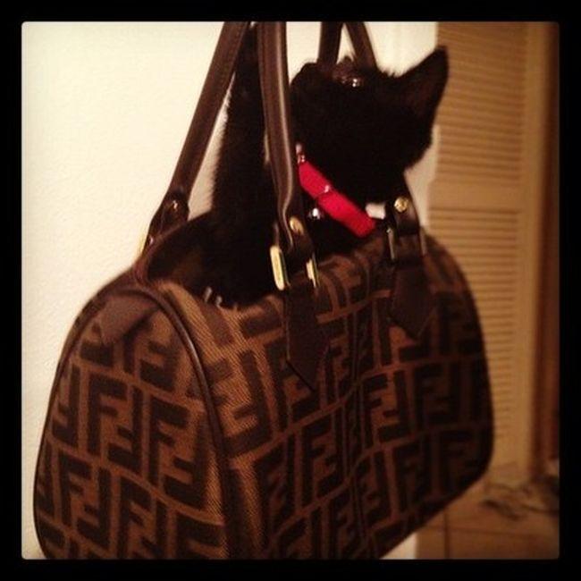 Rich Cats of Instagram (27 pics)