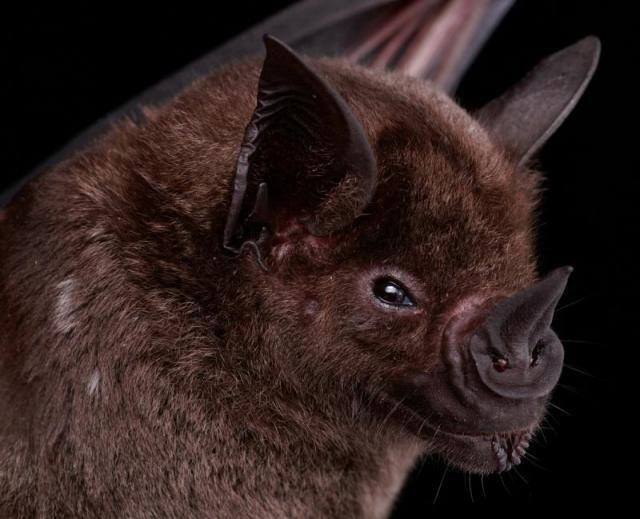 Diferentes tipos de murciélagos