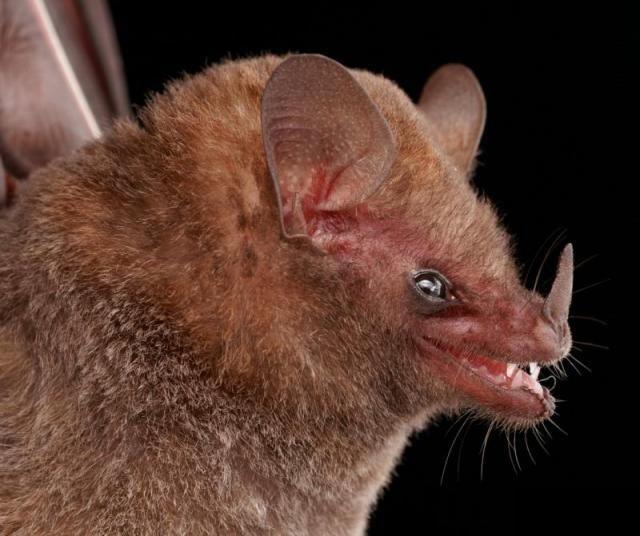 Diversity of Bats (50 pics)
