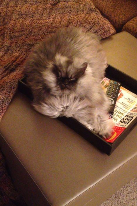 Colonel Meow is One Angry Cat (28 pics)