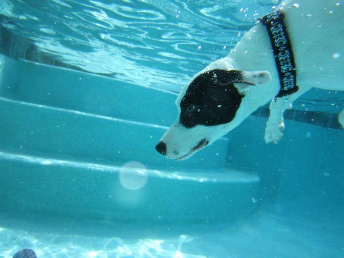 Underwater Dog (13 pics)