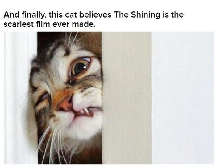 Cats Acting Out Their Favorite Movies (30 pics)