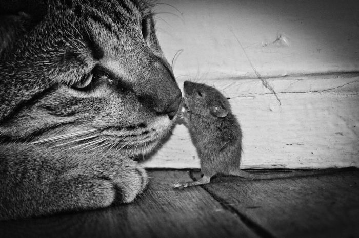 Cat and Mouse (6 pics)