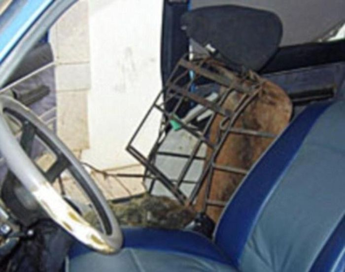 Smuggling a Man Inside a Car Seat (2 pics)
