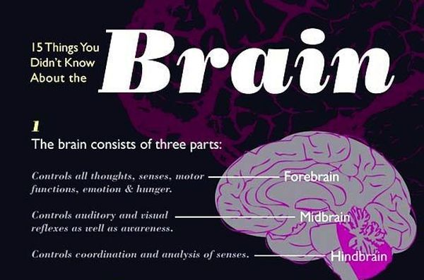 15 Things You Didn't Know About the Brain (1 pic)