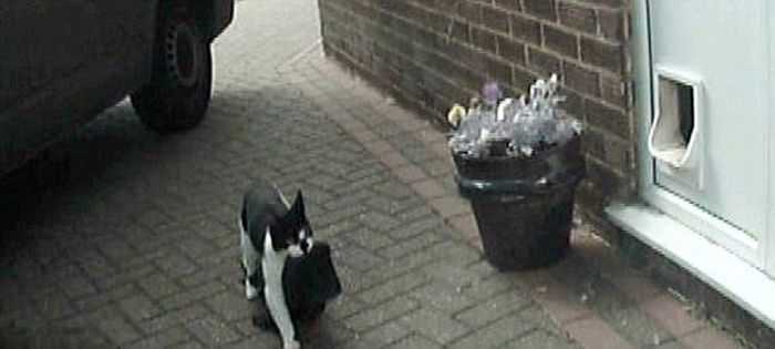 The Cat Who Steals Things from the Neighbors (7 pics)