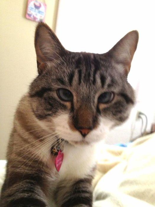 Cross Eyed Cat (22 pics)