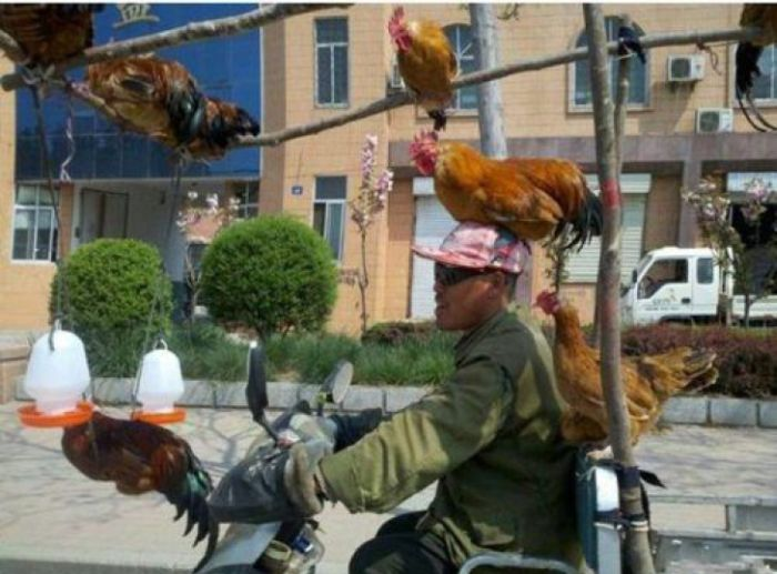 Chicken Transportation in China (3 pics)