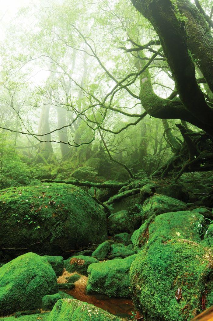 Beautiful Forest on Japanese Yakushima Island (12 pics)