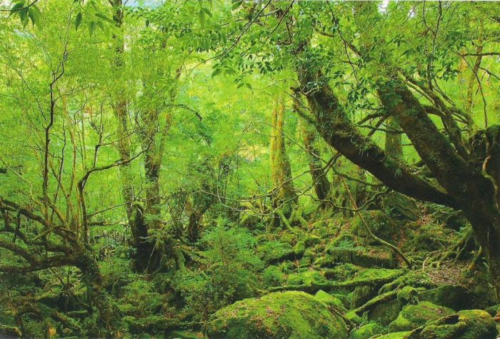 Beautiful Forest on Japanese Yakushima Island (12 pics)