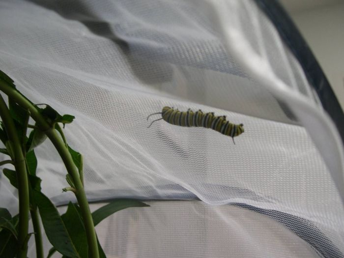 From Caterpillar to a Butterfly (16 pics)