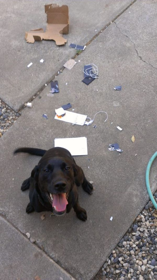 Don't Let Your Dog Unpack Your New Phone (2 pics)