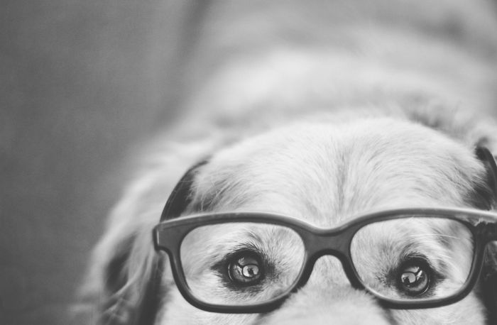 Awesome Dog Portraits (40 pics)