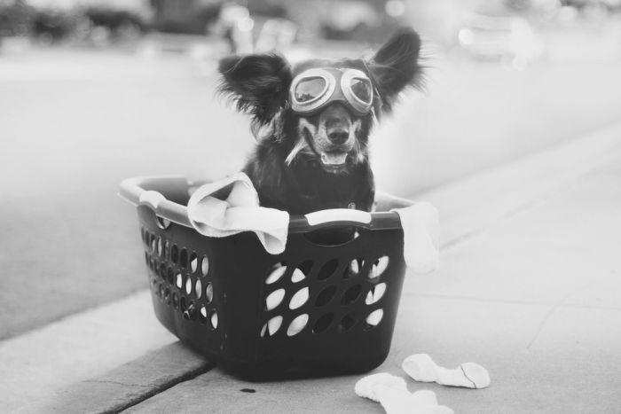 Awesome Dog Portraits (40 pics)