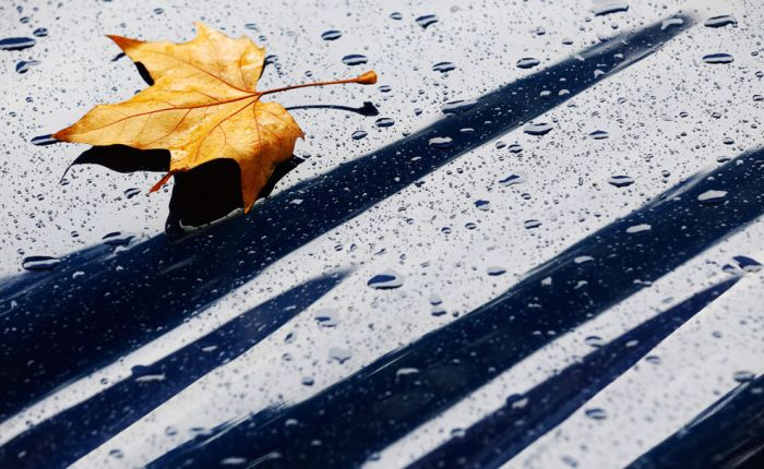 Fall Is in the Air (40 pics)