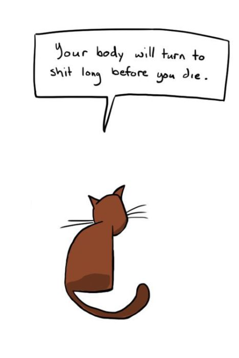 Hard Truths from Soft Cats (12 pics)
