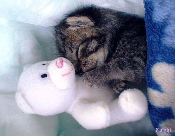 Hugging Kittens (25 pics)