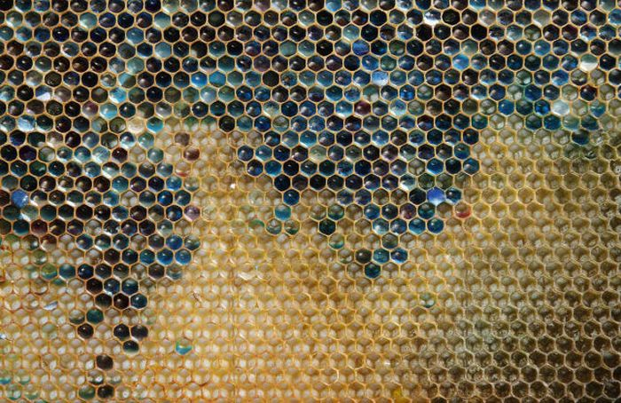 Riddle of the Day. Why Bees in France Make Such Honey? (9 pics)