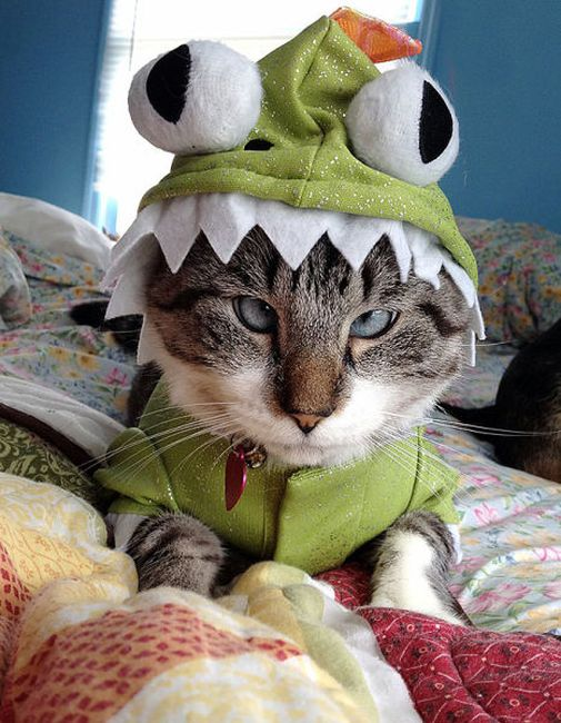 Hilarious Pet Costumes (20 pics)