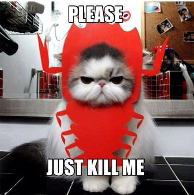 Hilarious Pet Costumes (20 pics)