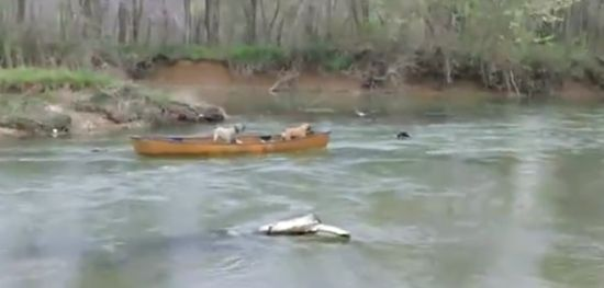 Amazing Dog Saves His Friends From The Boat