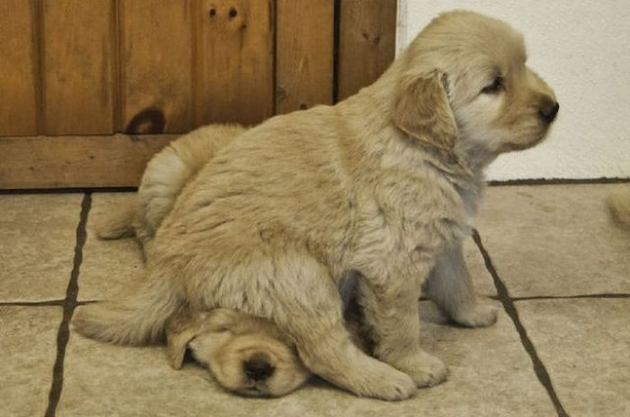 Why Dog Is Man's Best Friend (32 pics)