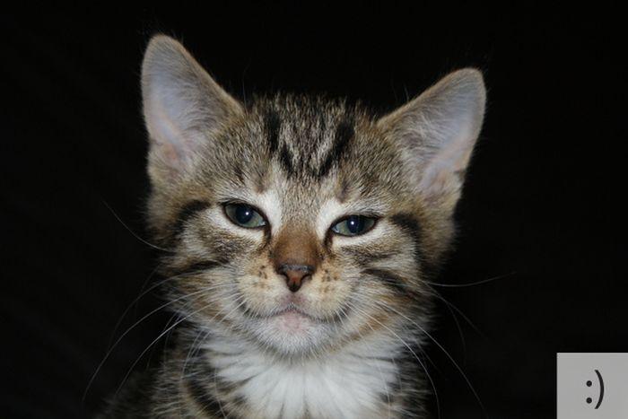 Cats As Emoticons (23 pics)
