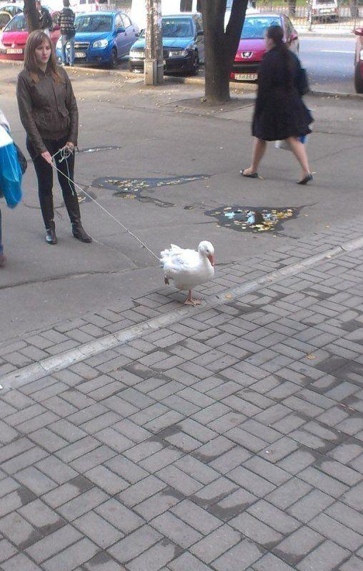 Only in Ukraine (3 pics)