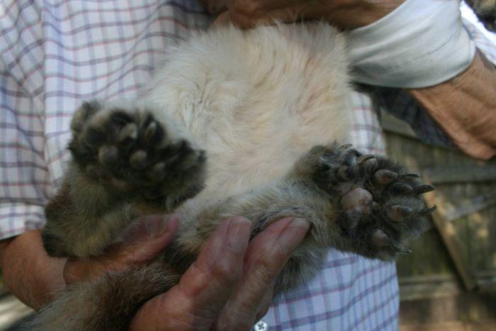 Mutant Cat (2 pics)