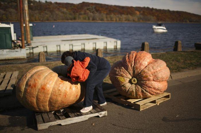 The Third Annual Pumpkin Regatta (11 pics)