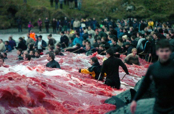 Faroe Islands (33 pics)