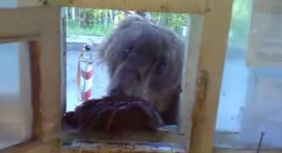Hungry Bear Wants To Eat