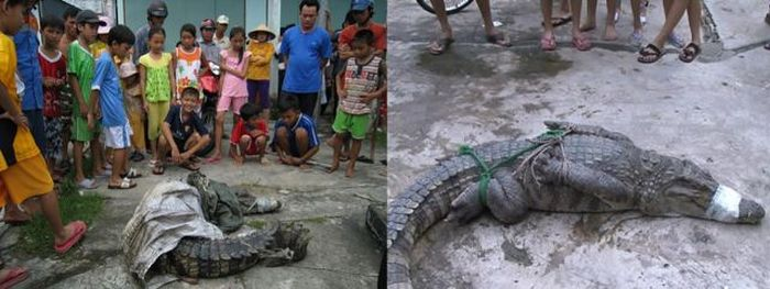 Crocodiles on the Loose (21 pics)