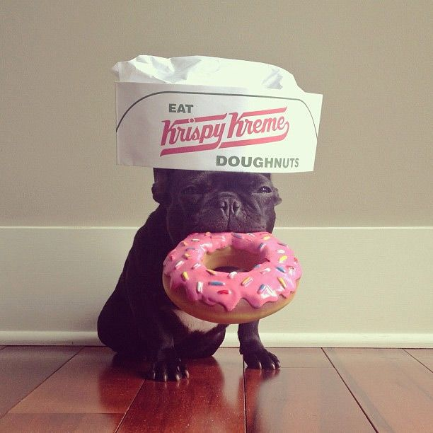 The Hipster French Bulldog Trotter (27 pics)