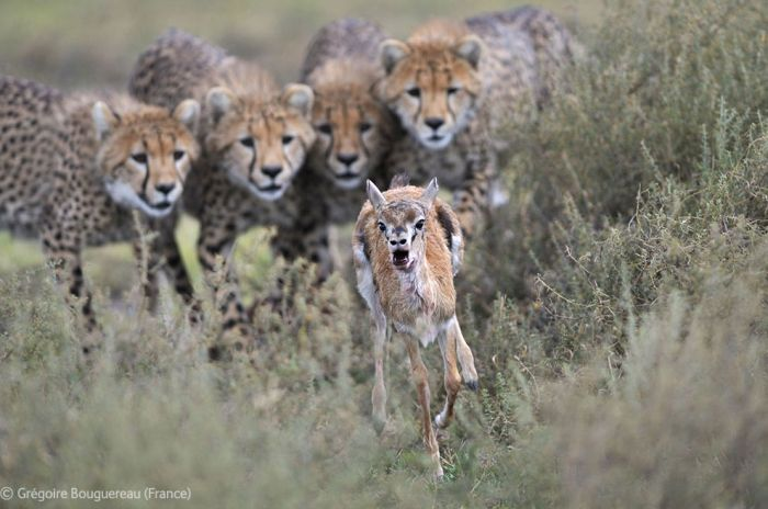 The Best Wildlife Photographs of the Year (44 pics)