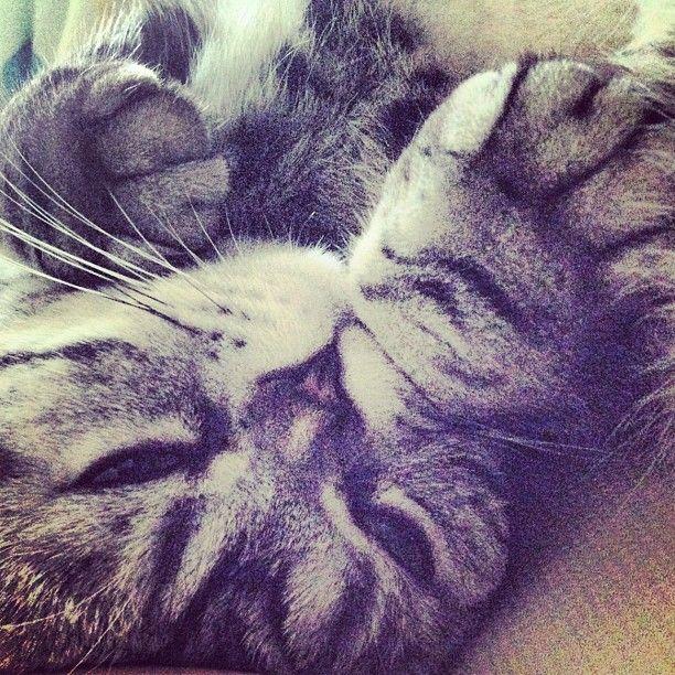 Shishi-Maru Cat is a New Internet Sensation (56 pics)