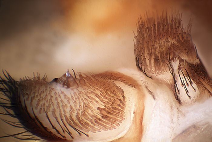 Creepy Microscope Close-Ups (17 pics)