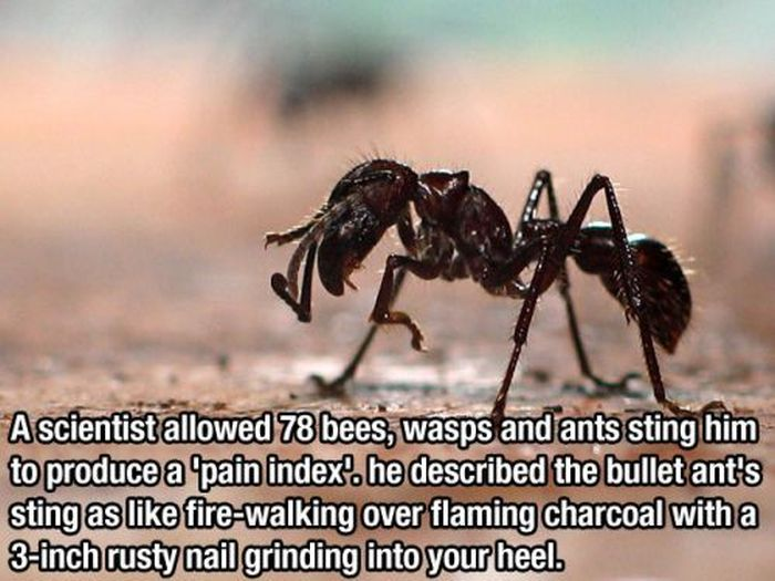 Interesting Facts (30 pics)