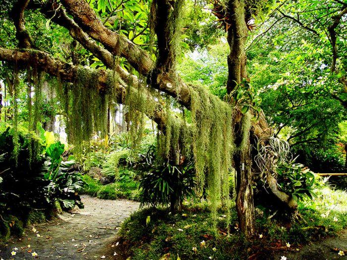 Garden Of Eden 32 Pics