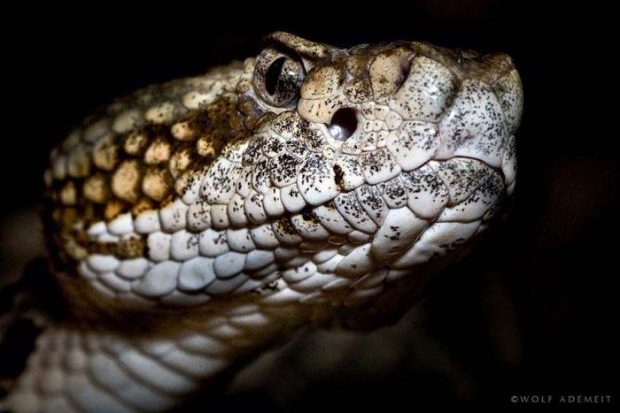 Beautiful Snakes (50 pics)