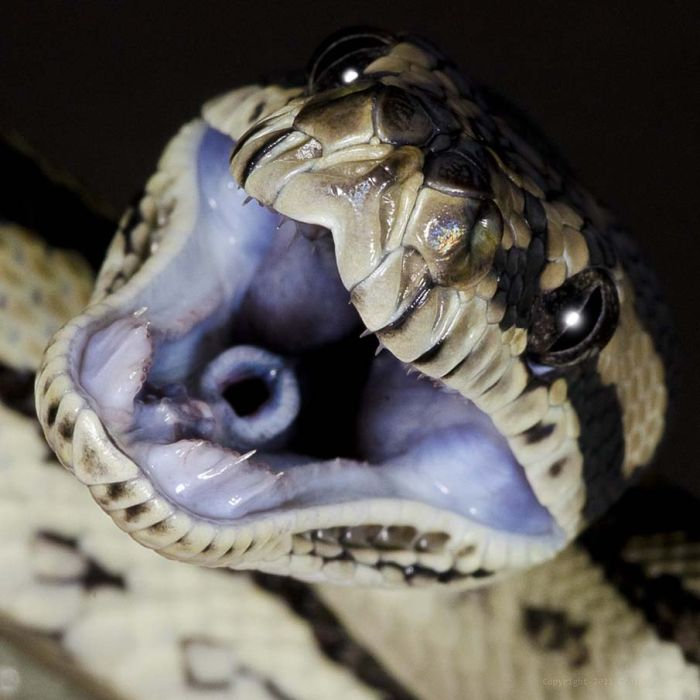 Beautiful Snakes (50 pics)