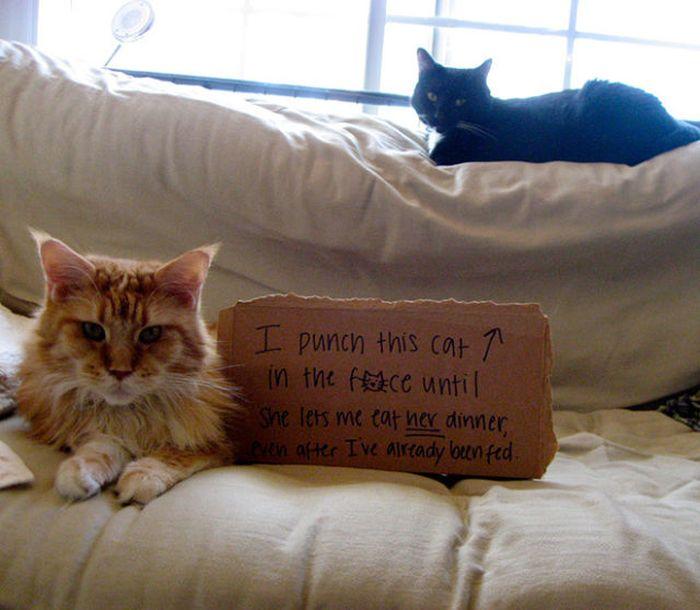 Cat Shaming (25 pics)