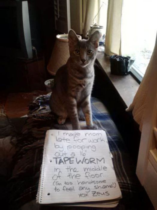 Cat Shaming (25 pics)