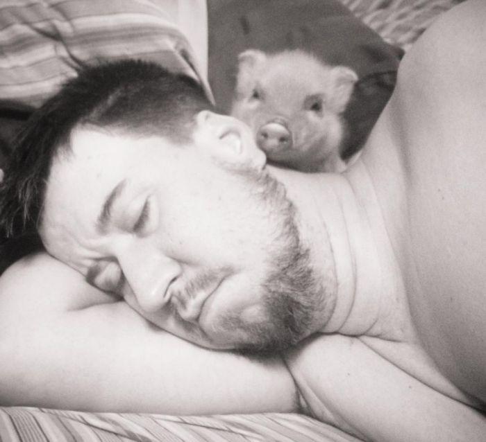 Pet Pig Named Bacon (7 pics)