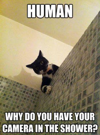 Incredulous Cat (60 pics)