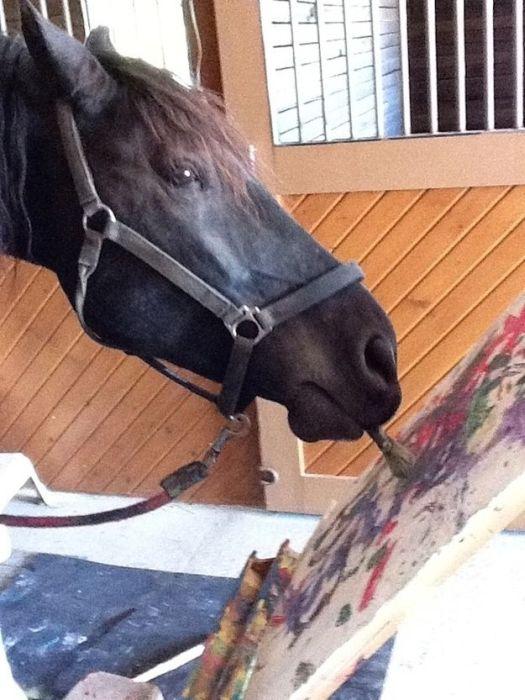Justin the Horse (10 pics)