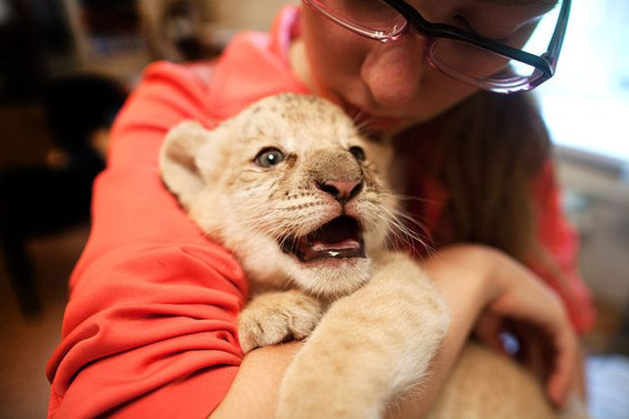 Kiara is the First Born Liliger Ever (20 pics)